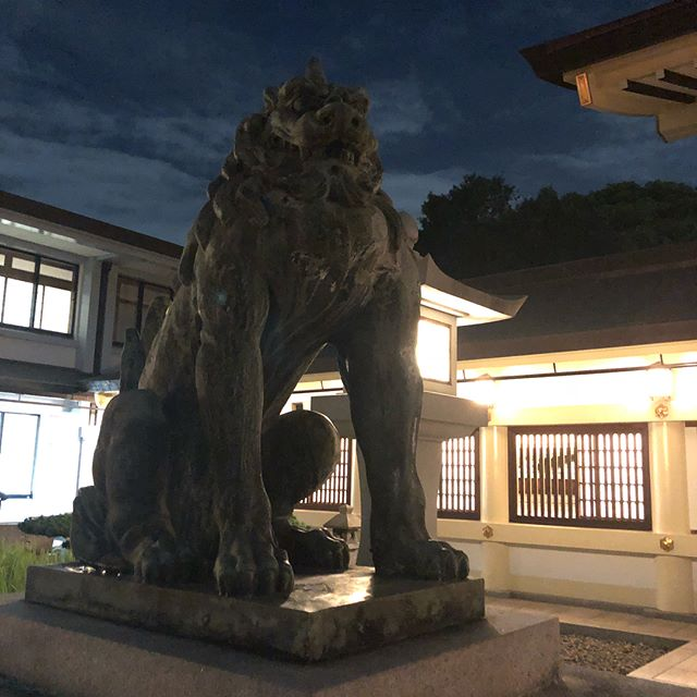 #komainu #狛犬 #shrine #献燈祭 #獅子 #阿吽